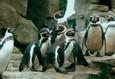 Пингвин нашего времени 8