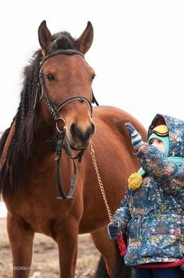 Мое первое знакомство с лошадью