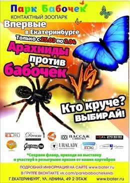 Арахниды против бабочек!
