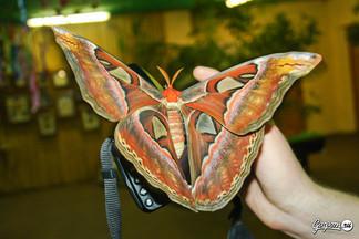 В преддверии Нового года в парке бабочек будет проходить специальная праздничная программа по мотивам м/ф тролли.