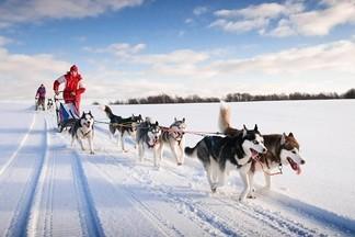 Хаски, сноукайтинг и другие виды активного отдыха в Екатеринбурге зимой 2018