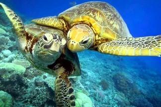 Как ухаживать за черепахами?
