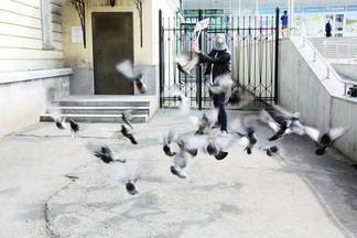 Анти-голубь выходит на охоту: Музей истории Екатеринбурга нашел своего супергероя