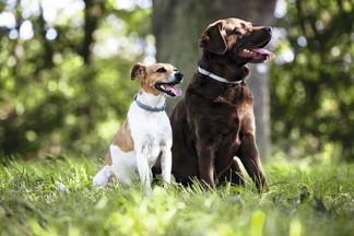 Как защитить собаку или кошку от клещей?