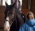 Учёная лошадка Детский праздник, фото № 43