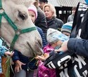 Учёная лошадка Детский праздник, фото № 19