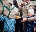 Учёная лошадка Детский праздник, фото № 23