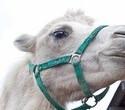 Учёная лошадка Детский праздник, фото № 15