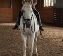 Учёная лошадка Детский праздник, фото № 39