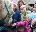 Учёная лошадка Детский праздник, фото № 18