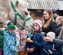 Учёная лошадка Детский праздник, фото № 20