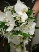 Flo-мастер Белые орхидеи
