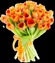 Сад Мальвины 35 тюльпанов