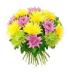Флоритория 19 больших хризантем