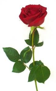 Красная орхидея Роза в оформлении - фото 1