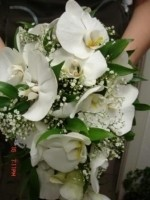 Flo-мастер Белые орхидеи - фото 1