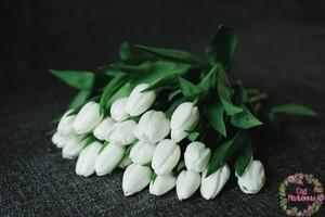 Сад Мальвины Тюльпаны - фото 1